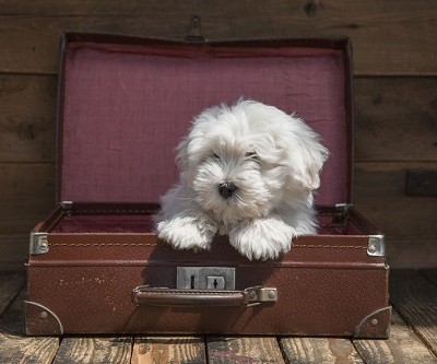 Accommodating Your Dog While Traveling