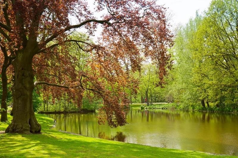 Relax in Vondel Park